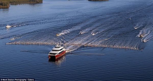 145 Water-Skiers, 1 Boat... Well That's How You Break A World Record! [Video]